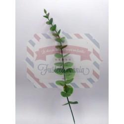 Rametto di eucalipto